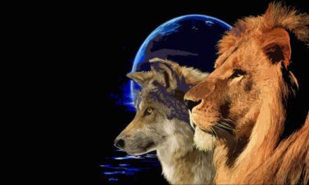 Serigala Pencuri dan Singa