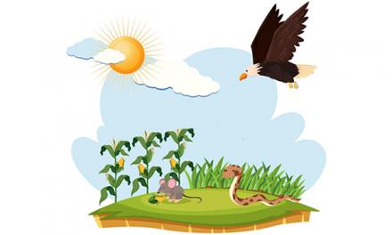 Ular Berbisa dan Burung Elang