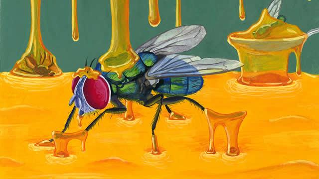 Lalat dan Madu