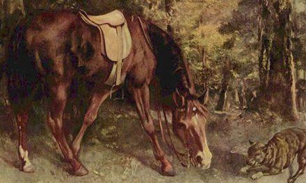 Rubah dan Si Kuda Tua