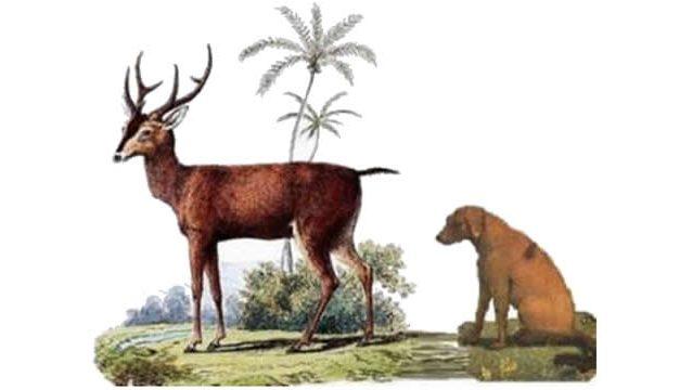 Rusa dan Anjing (Sulawesi Tengah)