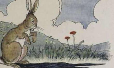 Kelinci dan Telinganya yang Panjang