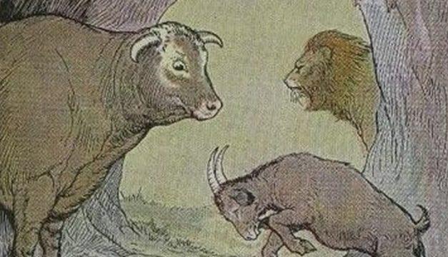 Kerbau dan Kambing